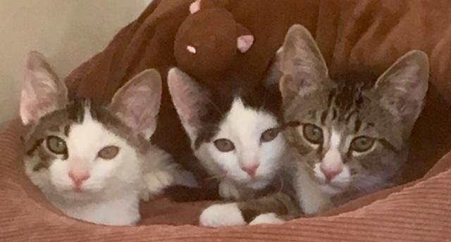 TGIF Kittens